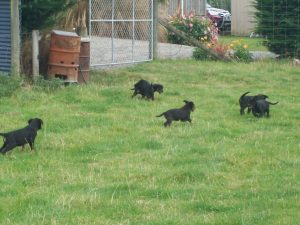 Pups playing in the grass